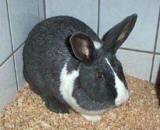 KaninchenBanny