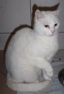 Katze Bayles