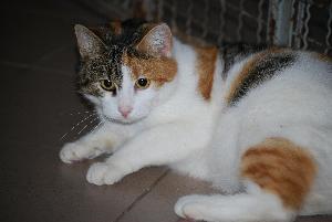 Katze Pira1
