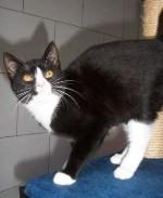 Katze-Saphira-web-schmal
