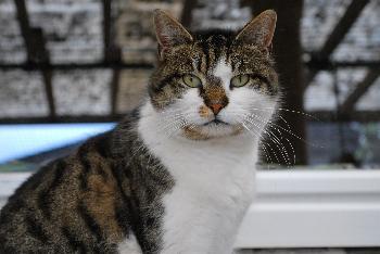Katze Susi1