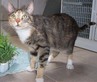 Katze Tigga