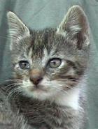 Katze0702-2
