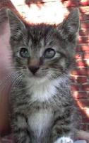 Katze0702-3