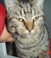 Katze11-03-1