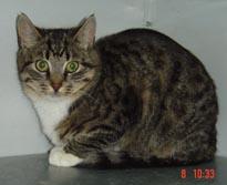 Katze1103-2