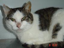 Katze1103-3