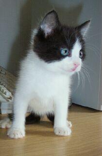 Katzenbaby Fidus