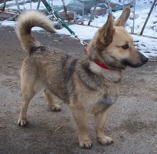 Paulinehund