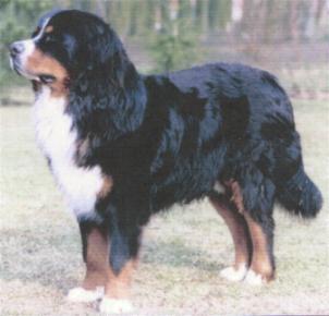 Rudi-Hund