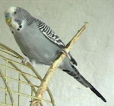 VogelGrau