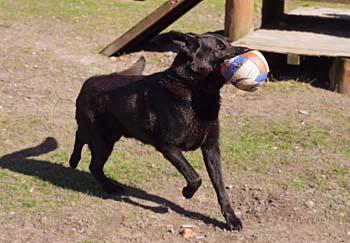 blackymann-kto-ball