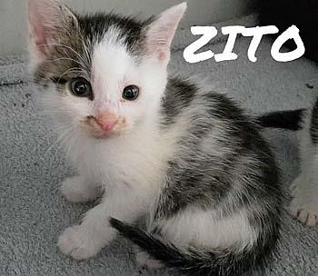 zito-jul16-sitzt