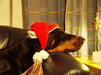 zeus-z-weihnachtsgruss